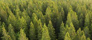 Metsät peittävät Suomen pinta-alasta jopa 78 prosenttia