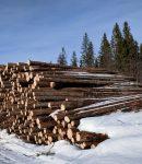 Sahatavara ja puusta valmistetut tuotteet ovat tärkeitä vientituotteita